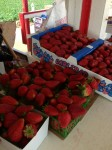 Jone's U-Pick Strawberries